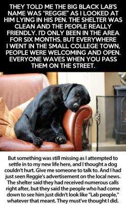 Take the time to read this story. If you love dogs, you'll cry like a baby! It still gets me.: Dogs Quotes, Animals, Sweet, Rescue, Baby, Lab Dogs, Eye