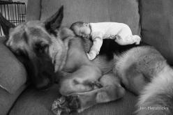 That is possibly the cutest thing I have ever seen: Germanshepherd, Animals, Dogs, Sweet, German Shepherds, Baby, Photo, Friend