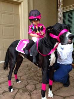 Top 5 Great Dane Dogs You have Ever Seen: Great Danes, Animals, Dogs, Halloween Costumes, Horse, Funny, Costume Idea, Kid