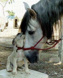 Very sweet: Animals, Best Friends, Sweet, Dogs, Horses, Pet, Creatures, Odd Couple, Animal Friends