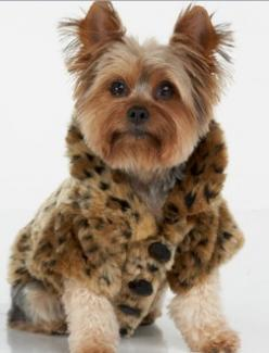 Wholesale Pet clothes and supplies Yorkie Spaniel Terrier Dog Photography Puppy Hounds Chien Puppies Pup Yorkshire Terrier: Leopard Print, Animals, Dogs, Pets, Puppy, Dog Coats