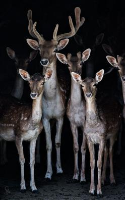 Wilderness | Retreat | Woodlands | Country | Nature | Haven | Forest | Deer: Animals, Nature, Beautiful, Wildlife, Families, Family Photo