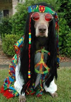 Give Peas a chance: Halloween Costume, Hippie Style, Funny Animal, Hippy Dog