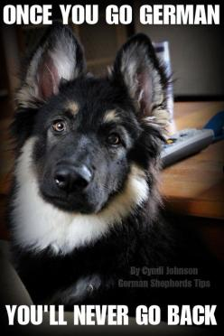 Gorgeous black and white shepherd! #dogs #pets #GermanShepherds Facebook.com/sodoggonefunny