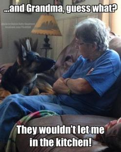 He's telling Grandma on you!!! LOL #germanshepherd #dog: Animals, Dogs, Pet, German Shepherds, Funny Animal, German Shepard, Grandma