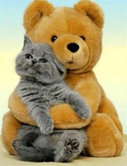 A bear and his kitty. Baffled how they got the cat to sit long enough to take a picture lol: Bearhug, Kitty Cats, Big Hug, Teddy Bears, Kitty Kitty, Bear Hugs, Animal