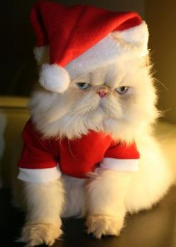 It's Santa Claws!