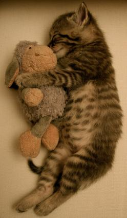 Just cuddling with my stuffed animal! Adorable kitten cuddling with it's special toy. #kitten #cat #animal: Cats, Kitty Cat, Animals, Sweet, So Cute, Pet, Kittens, Baby