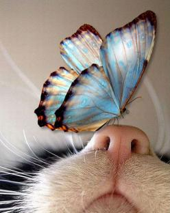 Kitties...Gentle flutter upon a nose: Cats, Kitty Nose, Animals, Sweet, Butterfly Kisses, Butterflies, Photo