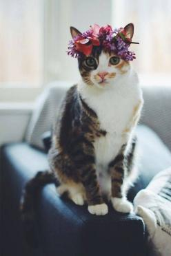 Kitty flower crown: Cats, Kitty Cat, Animals, Sweet, Flower Crowns, Pet, We Heart It, Kittens