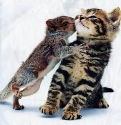 squirrel kissing a kitty, kiss, friendship, friends, cute, nuttet, fluffy, furry, photo, beautiful, cuddling.: Cats, Kiss, Kitten, Animals, Friends, Squirrels, Pet, Adorable