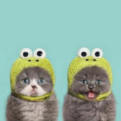 Such adorable little faces, but they would be much happier without the hats, yes?: Cats, Kitty Cat, Cute Kitten, Crazy Cat, Funny Cute Cat, Animal