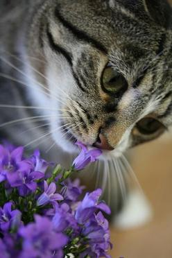 Taking time to smell the flowers So sweet. Happy Caturday Saturday from The Incensewoman: Cats, Kitten, Animals, Pretty Cat, Kitty Kitty, Chat, Pretty Flower
