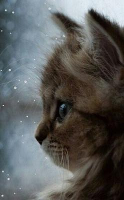 The eyes..: Kitty Cats, Animals, Beautiful Cats, Sweet, Chat, Beautiful Gif, Feline, Cats Kittens