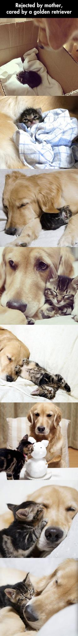 This is why animals are better than humans! They accept everyone and everything with there whole hearts <3