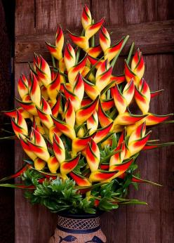 """""""Lobster Claw"""" Heliconia Rostrata, attracts butterflies and hummingbirds. Stunning!: Nature, Tropical Flower, Plants, Beautiful Flowers, Flowers Garden"""