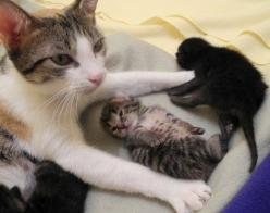 """You can look but DON'T TOUCH THEM."": Picture, Babies, Touch, Adorable Animals, Kittens, Kitty, Baby Kitties"
