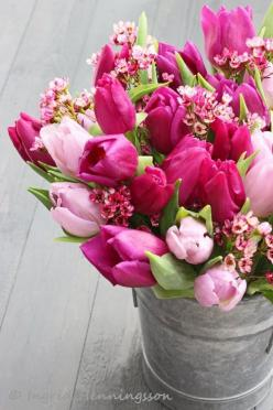 "A beautiful quote about ""Spring Fever"" from Mark Twain. When you got it, you got it. Have you got Spring Fever, too?: Pink Flower, Spring Flower, Beautiful, Flowers, Garden, Pink Tulips, Flower"