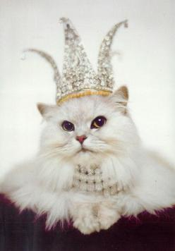 : Cats, Animals, Princess, Kitty Cat, Crowns, Queens, Queen Kitty, Pet, The Queen