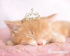 Fairytale Fantasy Photography at: http://www.pinterest.com/oddsouldesigns/fairytale-fantasy/ #cat #princess: Princess, Doll, Rachaelhale, Rachael Hale, Pet, Adorable, Kittens, Animals Cats