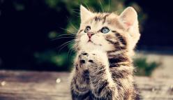God grant me the serenity to accept the things I cannot change, the courage to change the things I can, and the wisdom to know the difference.: Cats, Animals, God, Pets, Praying, Adorable, Kittens, Kitty