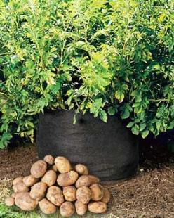 Grow potatoes in a bag.: Good Ideas, Garden Ideas, Gardening Ideas, Outdoor, Compost Bag, Growing Potatoes, Vegetable Garden, Grow Potatoes