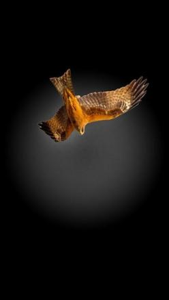 Night Hunter | Amazing Pictures - Amazing Pictures, Images: Animals, Birds 05 Raptors, Night Hunter, Art Photography Birds, Animal Kingdom Birds Fish Etc, Birds Feathered Wonders, Fly Winged, Beautiful Birds