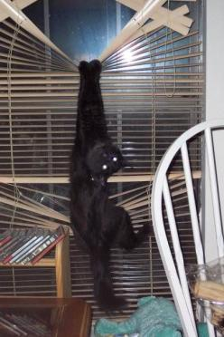 Oh hi. Youre home early. This is so my cat, she loves climbing (and ruining) my blinds. ... http://fb.me/humorwithin: Cats, Animals, Funny Cat, Funny Stuff, Funnies, Funny Animal, Dog, Kitty