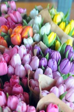 Pastel Tulips: Beautiful Flower, Color, Flower Power, Tulips, Flowers, Spring, Garden, Floral, Favorite Flower