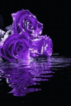 #Pinterest Pin-a-way by http://www.JoannaMaGrath.com: Roses Lilacs Lily, Colour Purple, Holy Purple, Passionately Purple, Color Purple, Purple Roses, Glorious Purples