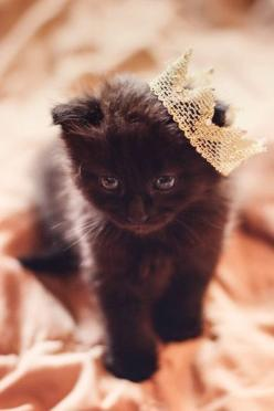 ❣Queen Kitten ;) ❤️ Tehehe Thanks Prettty Shes adorbs ; ): Mill, Animals, Queen, Black Cats, Posts, Cat Crown, Black Kittens, Kitty