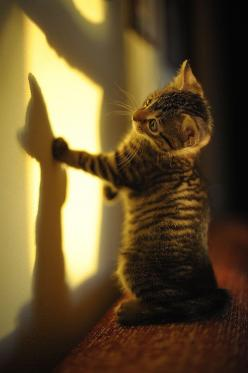 silhouette | via tumblr: Kitty Cats, Animals, Pet, Adorable, Kittens, Kitties, Shadows, Friend