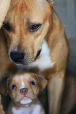 The look of love...: Animals, Sweet, Dogs, Mother, Pet, Puppy, Baby