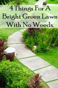 These are all natural ways to have a green lawn with no weeds: Garden Ideas, Natural Things, Yard, Bright Green, Green Lawn, Lawn Care
