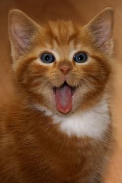 This little dude who is EXTREMELY surprised. | 39 Overly Adorable Kittens To Brighten Your Day: Cats, Animals, Happy Face, Kitty Kitty, Kittens