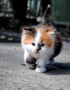 Untitled by Stacy Stacy, via 500px: Kitty Cats, Beautiful Cat, Adorable Animals, Calico Cats, Kittens, Baby