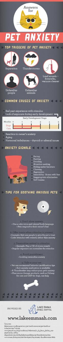 When owners are anxious, their pets may also become anxious! Using a calm voice and relaxed body language is essential for calming a pet: Pet Anxiety, Anxiety Infographic, Pet Care, Anxiety Dog, Petanxiety, Dog Health, Doginfographics Dogs, Animal, Anxiou