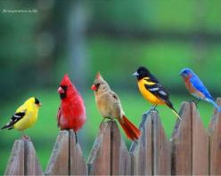 birds, Goldfinch, Cardinal pair, Oriole, Eastern Bluebird ♡♡♡♡♡: Animals, Nature, Color, Real Angry, Beautiful Birds, Angry Birds, Photo, Angrybirds