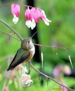 Hummingbird resting at Flowers - by alandrapal