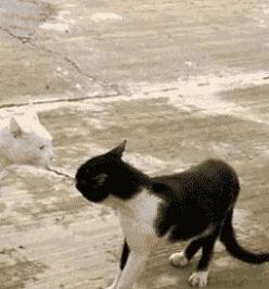 I dont know Karate. But I know Karazy!   27 Cats That Just Cant HandleIt