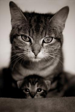 Baby kitty feels warm & safe w/ her Mama Kitty.