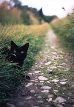 Beautiful surprise, black cat on the path