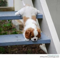 Doggy Newsletter - Doggies on Stairs - From A Place To Love Dogs