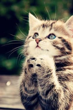 fashion | clothing | dress | wedding | jwelry | pats | dogs |cats | wear: Cats, Animals, God, Pets, Praying, Adorable, Kittens, Kitty