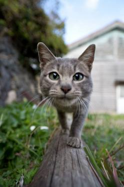 Photographer Fubirai has spent the last five years documenting the lives of the semi-wild cats that roam the island in Fukuoka, Japan. The cats are fed by local fishermen and wander freely through the streets, boatyards, porches, and houses of the city. H