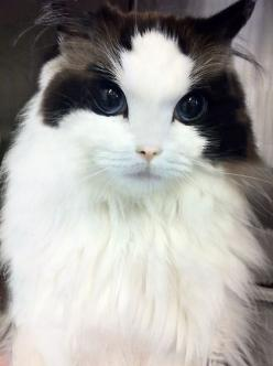 Seriously. | 8 Cats That Are Prettier Than Most Humans