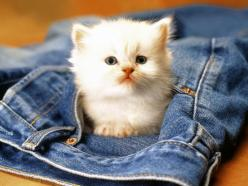 """* * """" Dennis, pleeze.me needs yer jeans. Yoo haz other pairs."""": Cats, Pets, Jeans, Pockets, Adorable, Baby Animals, Kittens, Photo, Kitty"""
