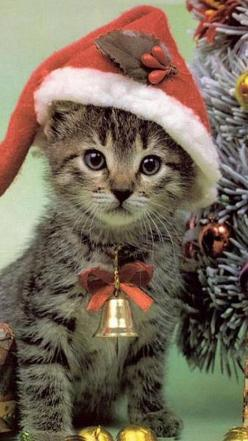 """For whiskers sake, don't forget me Santa!"" #kittens #pets  facebook.com/sodoggonefunny: Holiday, Christmas Cats, Christmas Kitties, Christmas Animals, Pet, Christmas Kitty, Kittens, Merry Christmas, Christmas Kitten"