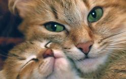 A mother cat and her baby cuddling faces.: Cats, Animals, Sweet, Mothers, Pet, Kittens, Baby, Kitty, Eye