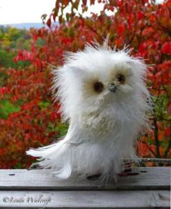 And now you know Disheveled Owls exist and they're awesome - Imgur: Fluffy Owl, Animals, Little Owl, Baby Owl, Bad Hair, Disheveled Owl, White Owl, Birds, Owls